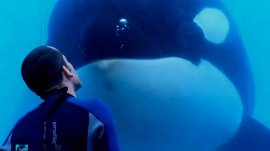 Blackfish-documentary